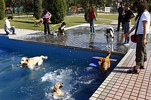 Pet Club At Beijing Park